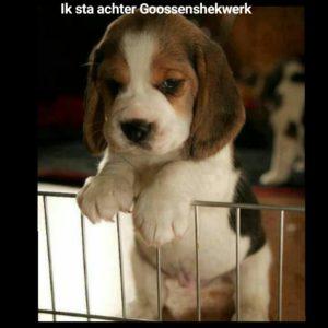 www.goossenshekwerk.nl